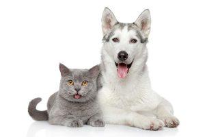cao gato juntos