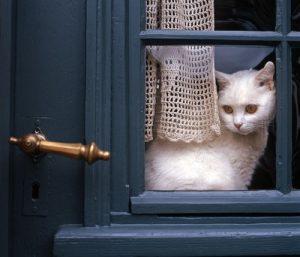 gato janela