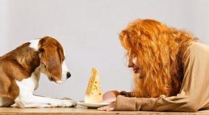 Alimentação canina cão