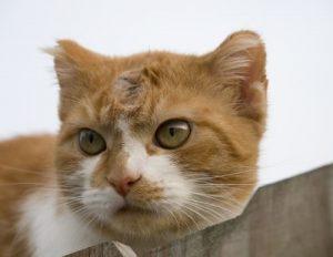 gato fungos