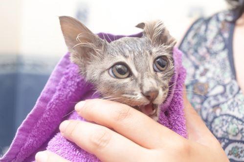 Banho gato