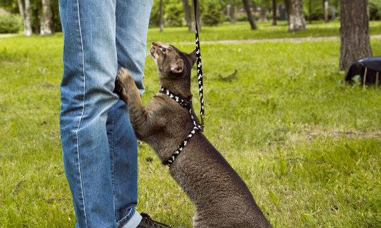 coleiras para gatos entenda um pouco mais