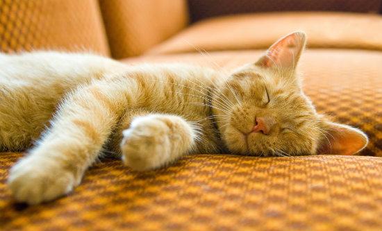 dicas e cuidados para quem tem gatos em apartamentos