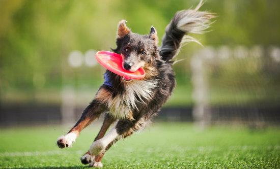 conheca 6 brincadeiras de cachorro que podem ser feitas ao ar livre