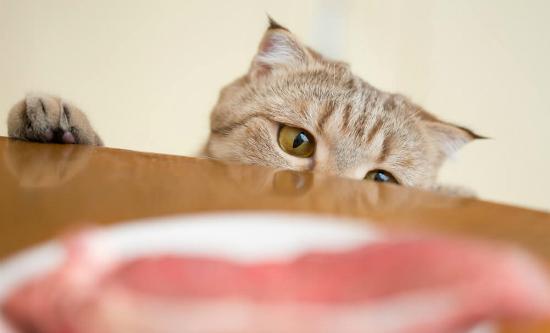 12 alimentos proibidos para gatos que você não conhecia