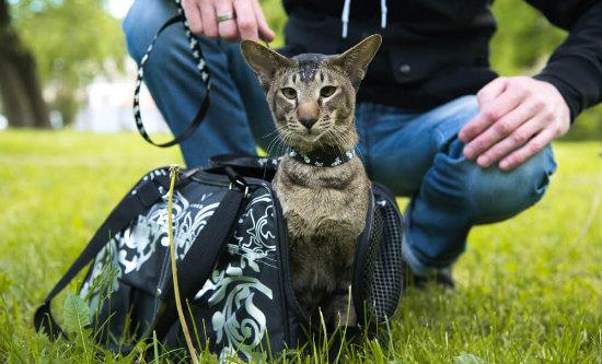 é possível adestrar gatos de verdade