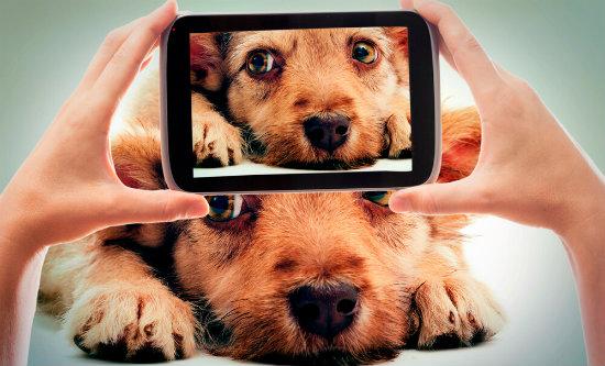 8-perfis-de-instagram-de-animais-que-mostram-todo-o-seu-amor.jpeg