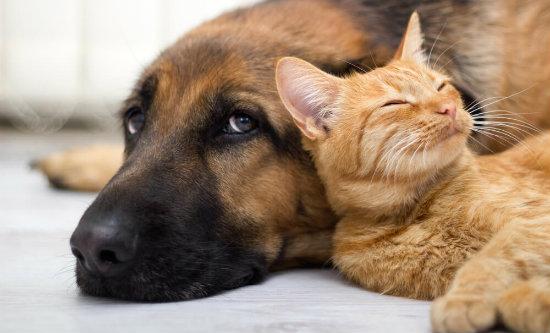 convivencia-entre-caes-e-gatos-5-dicas-para-viver-em-harmonia.jpeg