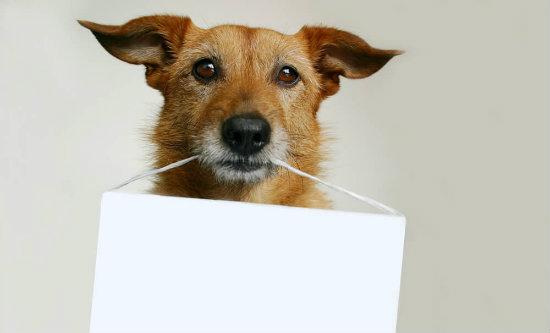 placa-de-identificacao-para-animais-entenda-a-importancia.jpeg