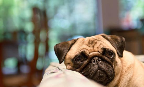 60507-8-dicas-para-voce-identificar-sintomas-de-doencas-em-caes-e-gatos