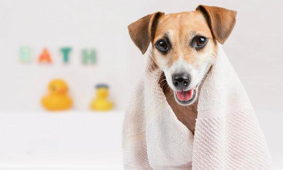 Cão com toalha