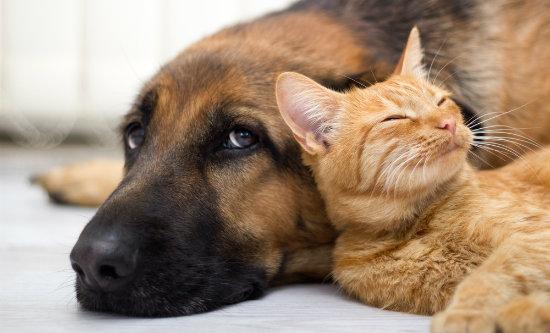 Cão e gato juntos