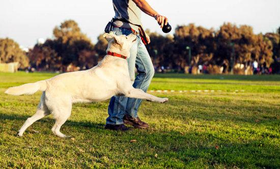 Cão passeando com homem