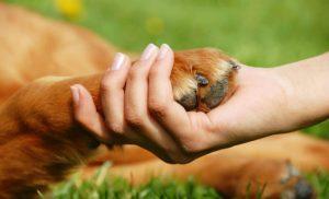 Pata de cão e mão humana