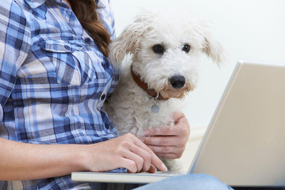 Cão com mulher olhando notebook