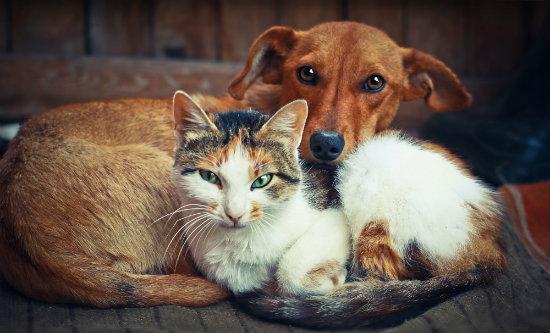 Cão e gato deitados